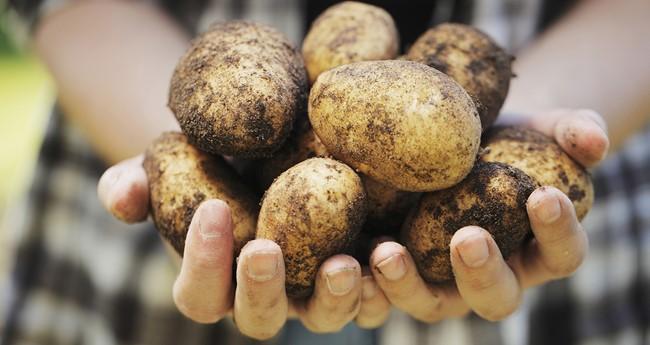 Do potatoes have gluten?