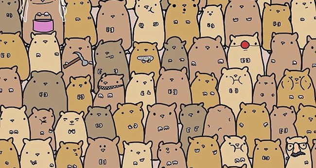 Find the potato in this sea of hamsters
